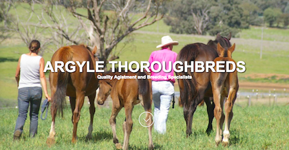 Argyle Thoroughbreds